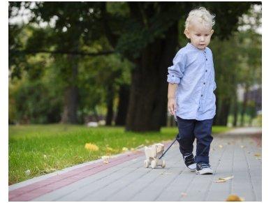 Traukiamas šuniukas Amsius 5